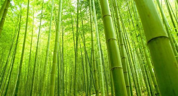 bambu madera ecológica